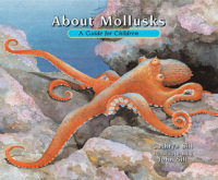 About Mollusks