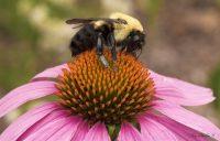 Beekeeperpost1.jpg