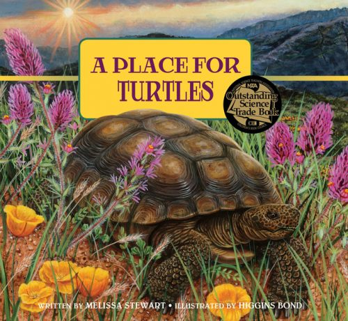 Place for Turtles Revised