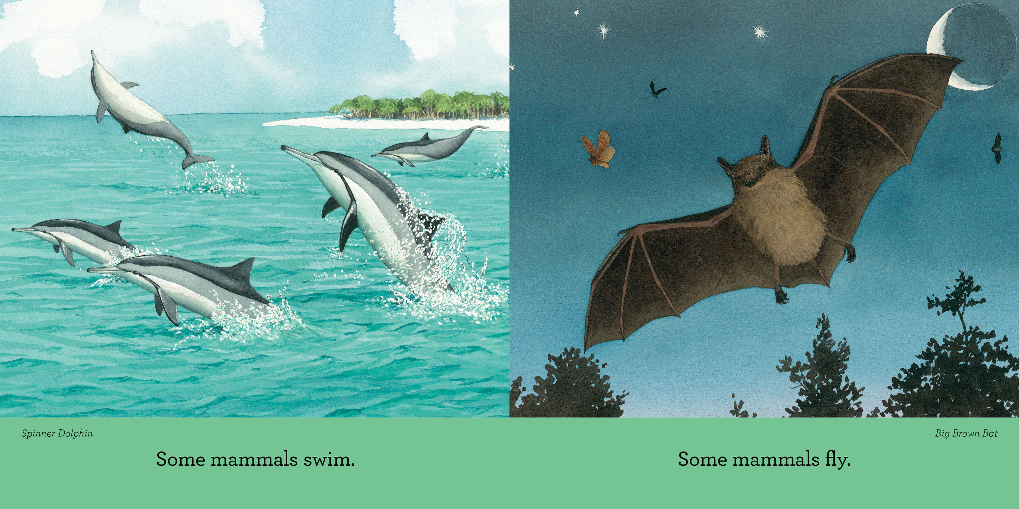 Curious About Mammals_interior spread1