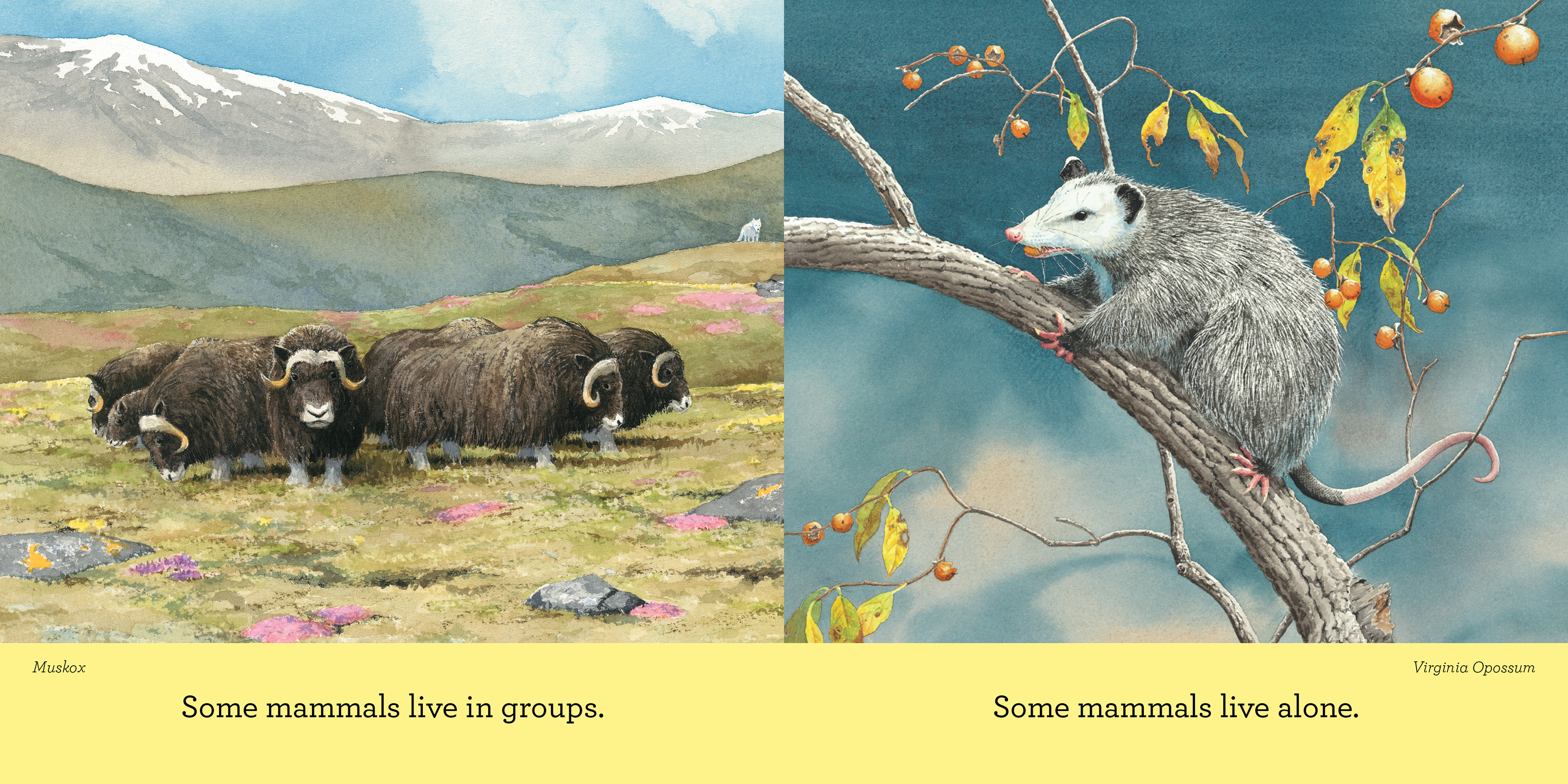 Curious About Mammals_interior spread2