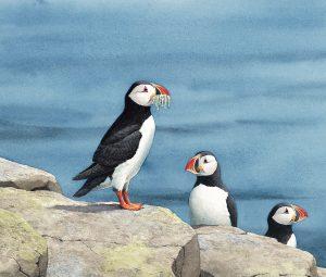 About Seabirds interior art7